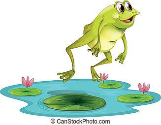 a, springende , frosch, an, der, teich