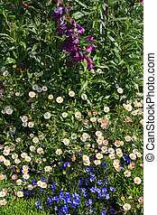 A springtime flower bed with different kinds of flowers and herbs