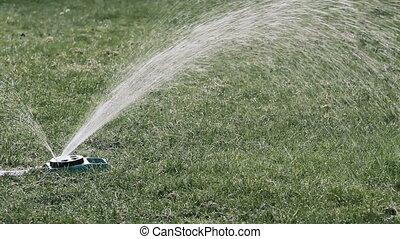 A sprinkler watering green lawn