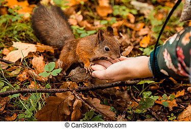 a squirrel fed from the hand in a park