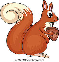 A squirrel - Illustration of a squirrel on a white...