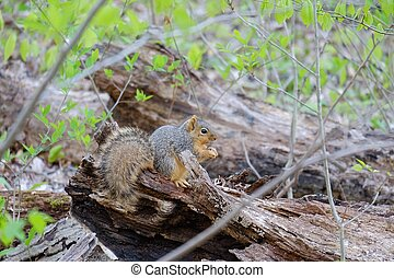 A squirrel standing on a branch