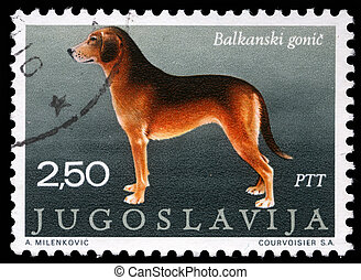 Serbian Hound - A stamp printed in Yugoslavia shows the ...