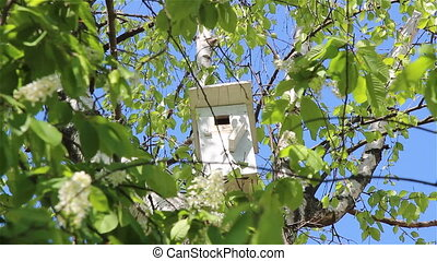 A starling nesting box - A nesting box with a starling...