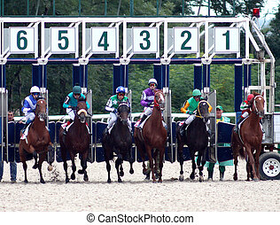 A startgate full of horses about to start the race.