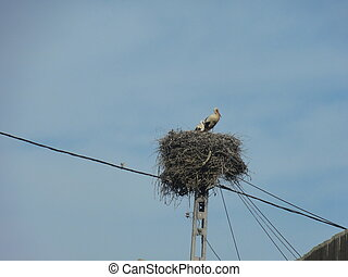 A stork of end in its nest