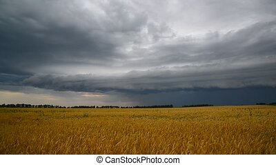 A stormy front over a ripe wheat field. Russia - A stormy...