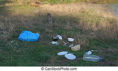 A stray cat sits on the grass in a garbage dump on the river Bank.