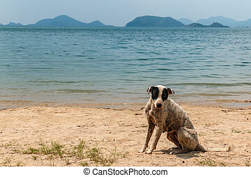 A stray dog on the beach