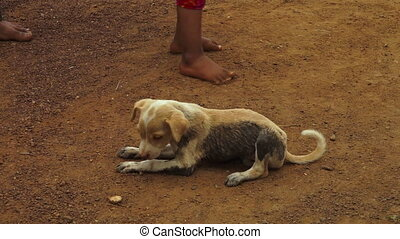 A stray dog sniffing