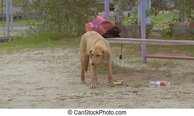 a stray dog walking on the playground slow motion video