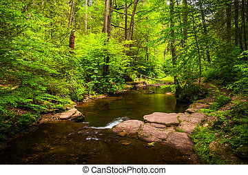 A stream in a lush forest at Ricketts Glen State Park,...