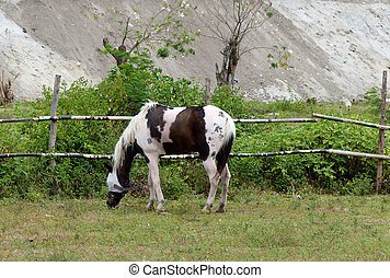 horse grazing in the grass field