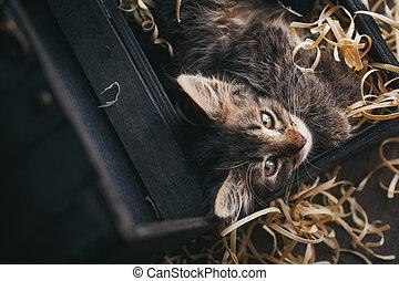 A striped cat in a box.