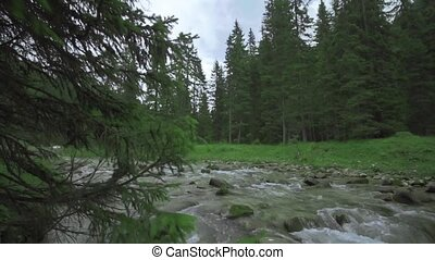 A strong current of water flows between the boulders of nature and in the middle of the green pine trees