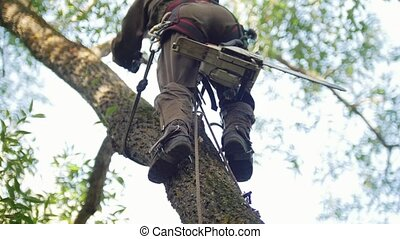 A strong man in a special suit with a chainsaw climbs a tree...