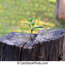strong seedling growing in the center trunk tree as a concept of support building a future.