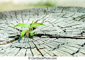 A strong seedling growing in the center trunk tree as a Concept of support building a future..focus on new life