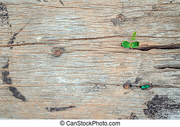 a strong seedling growing on old wooden table with copy space