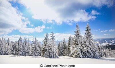 A strong winter sun
