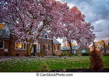 A Suburban Home With Pink Trees Out Front of It