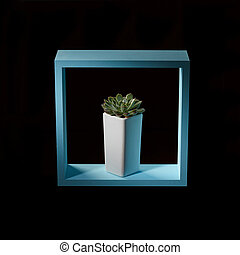 A succulent plant echeveria in a flowerpot in a blue wooden frame around a dark background