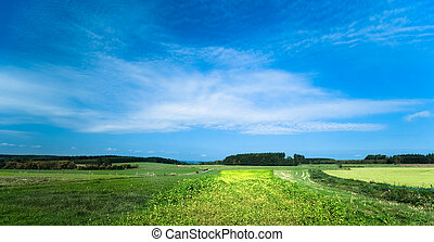 a summer landscape background