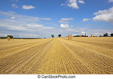 stubble field - a summer landscape with tall stacks of...