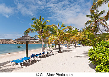 A beautiful sunny and sandy Caribbean beach with sunloungers, umbrellas and palm trees.