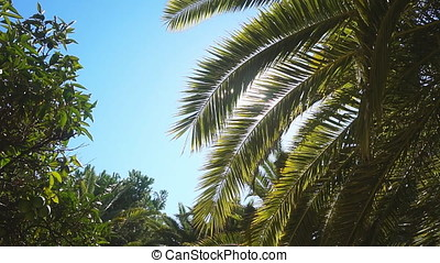 A sunny day in the warm South. The sun's rays make their way through the leaves of the palm tree.