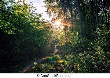 A sunset on a small idyllic forest path