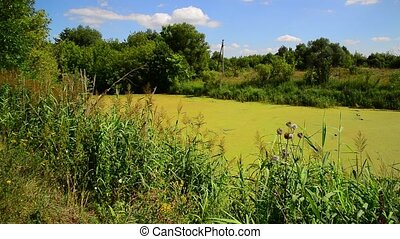 swampy pond surrounded by trees - A swampy pond surrounded...