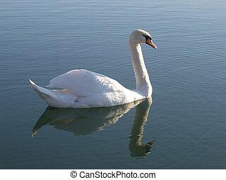 A swan profile