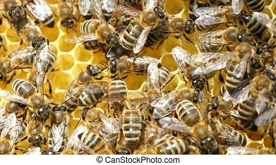 A swarm of bees crawl on the beecomb hexagons with honey and...