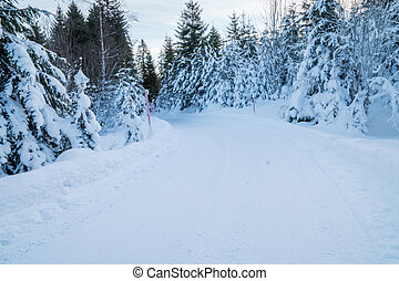 A Swiss forest covered in snow - A forest in Switzerland...