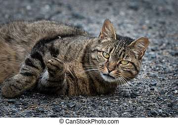 A tabby cat lying on the ground