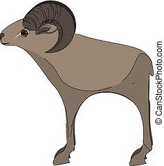 A tall mouflon vector or color illustration
