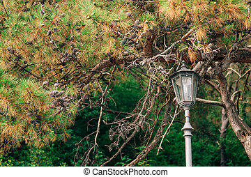 A tall street lamp near a fir tree with cones against a background of green trees.