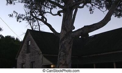 A tall tree beside a haunted house - A tilt down shot of a...