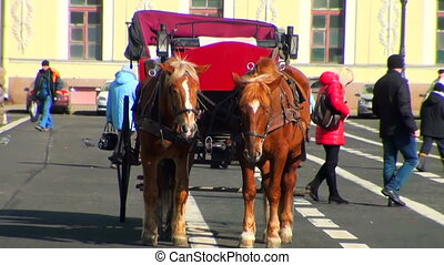 A team of two horses