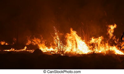 A terrible dangerous wild fire at night in a field. Burning...