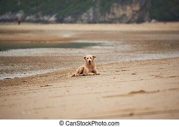 A Thai dog sitting on the beach