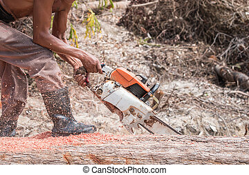 Thai worker cutting trunk with chainsaw - A Thai worker...