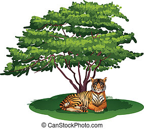A tiger under the tree