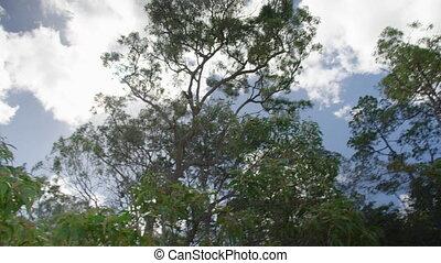 A tilt down shot of trees to beach - A tilt down shot of the...