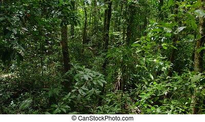 A tilting upward shot of trees. Wide shot of trees,