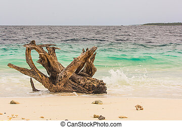 A Timber on the Beach