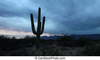 Timelapse of the Sonoran Desert at sunset