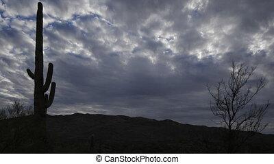 Timelapse of the Sonoran Desert in moonlight