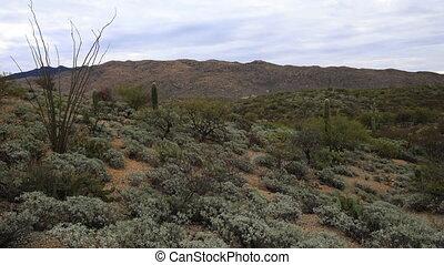 Timelapse of the Sonoran Desert near Tucson